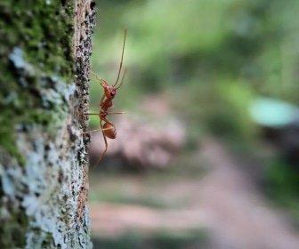 Vergeet de boomlijmbanden niet want de mieren zijn al actief!