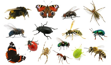 Biodiversiteit is hét antwoord op plagen!