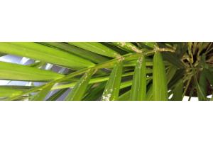 Ziekten bij kamerplanten
