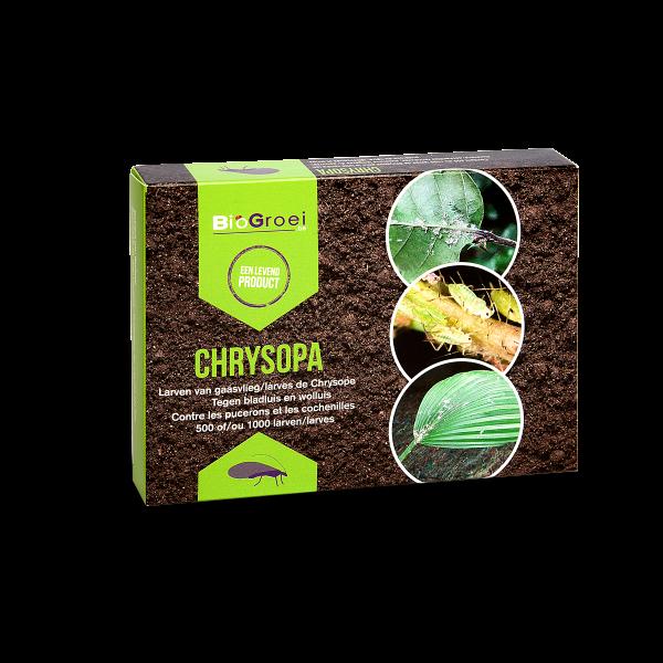 Chrysopa-1000