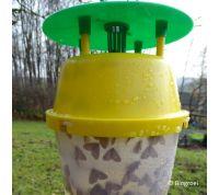 Funnelval kleine wintervlinder