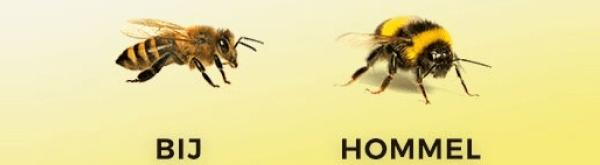 Een hommelkast of bijenkast plaatsen?