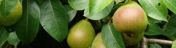 Fruitmot: herkennen en bestrijden