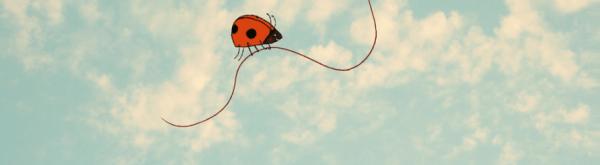 Uitheems of inheems lieveheersbeestje