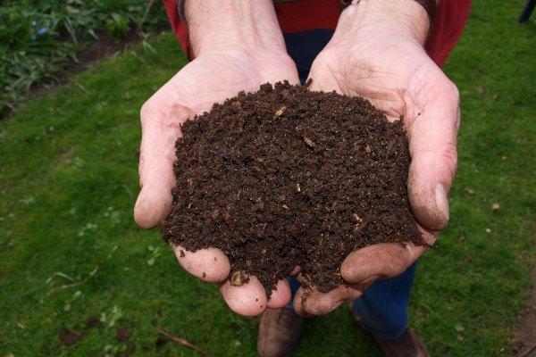 compost in handen