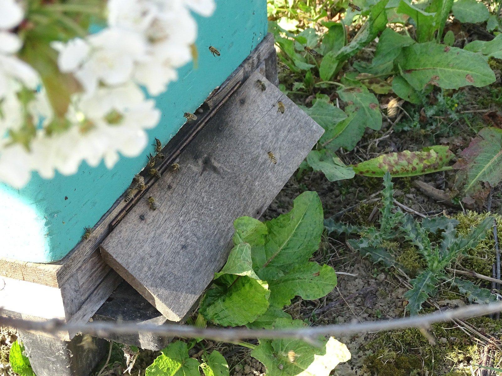 Aanvliegende bijen