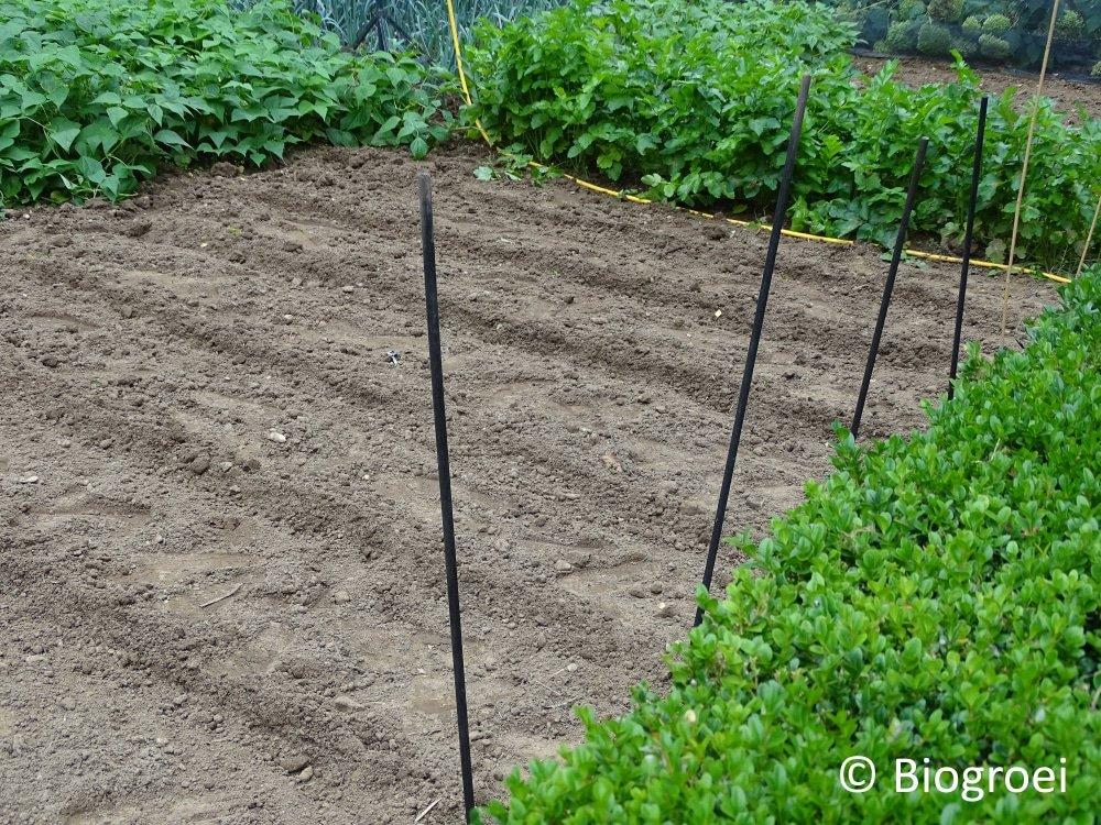 Laatste keer planten in volle grond