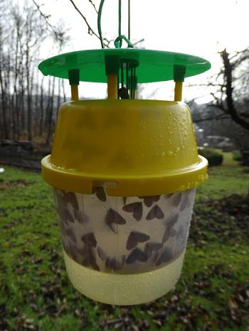Kleine wintervlinders gevangen in funnelval