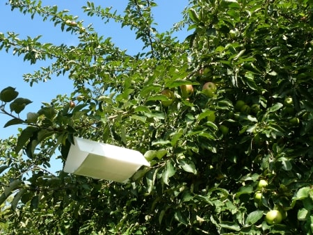 Biogroei deltaval fruimot