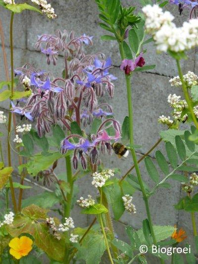 nuttige insecten en kruiden