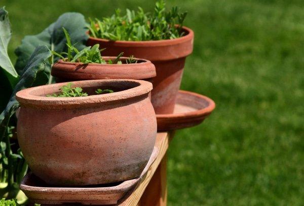 kruiden in potten