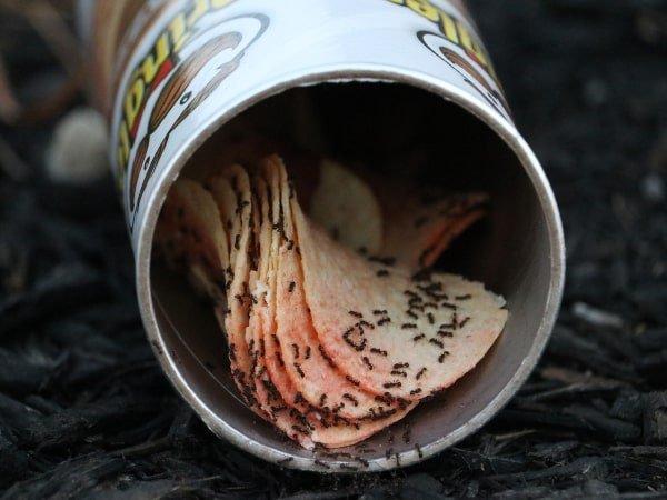 afval trekt mieren aan