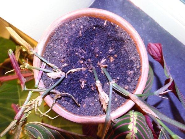 schade rouwvliegjes
