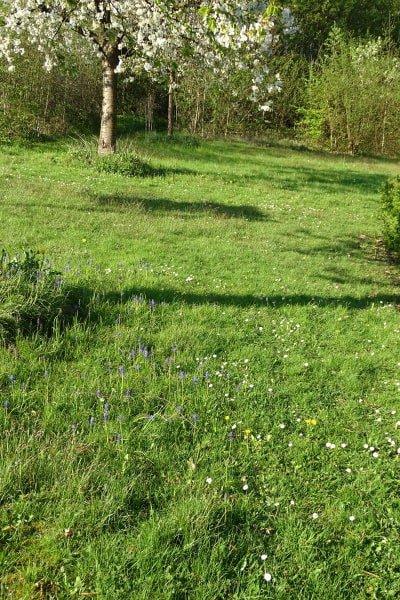 grasveld met bloemen en boom