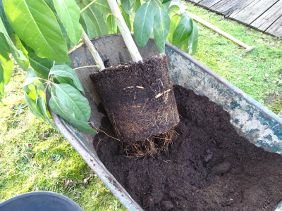 plant verpotten