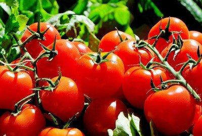 tomaten aan plant 400x270px